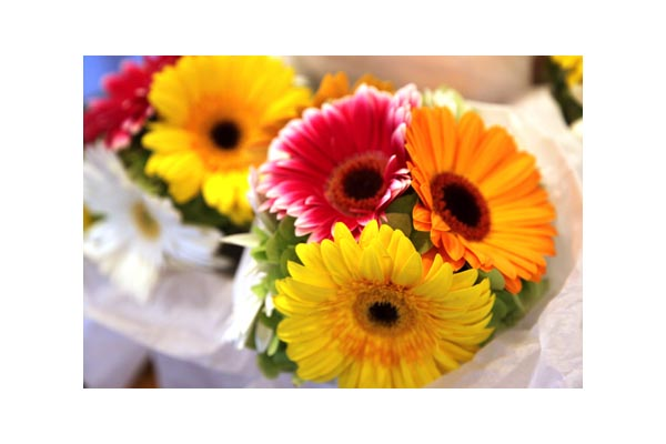 Gerbera Bridesmaids