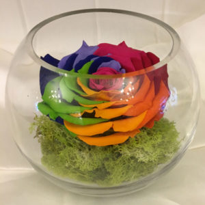 Medium Fishbowl with Rainbow Preserved Super Rose