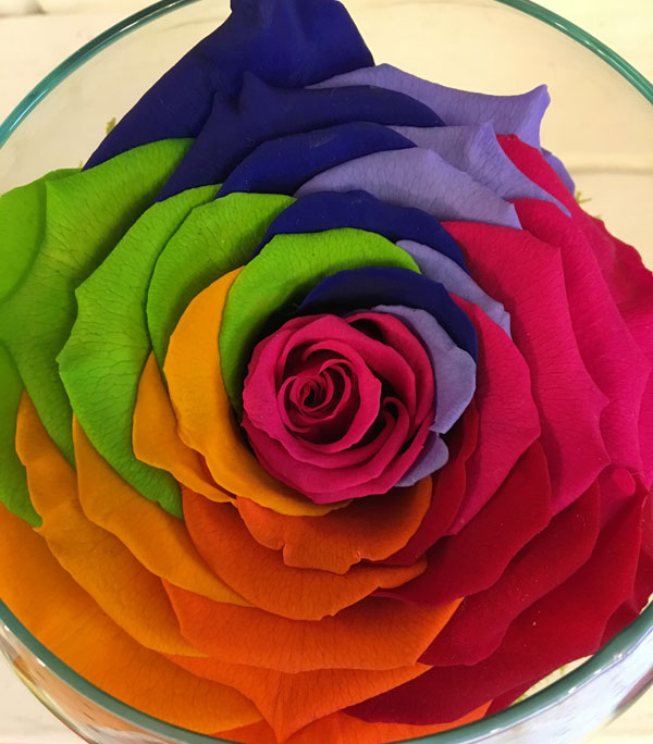 Order medium fishbowl with super preserved rainbow roses for Where to buy rainbow roses