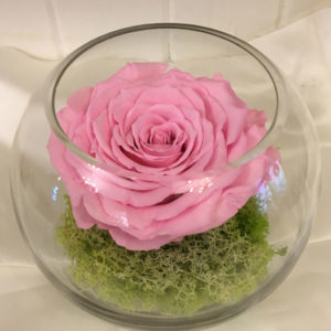 Medium Fishbowl with Pink Preserved Super Rose