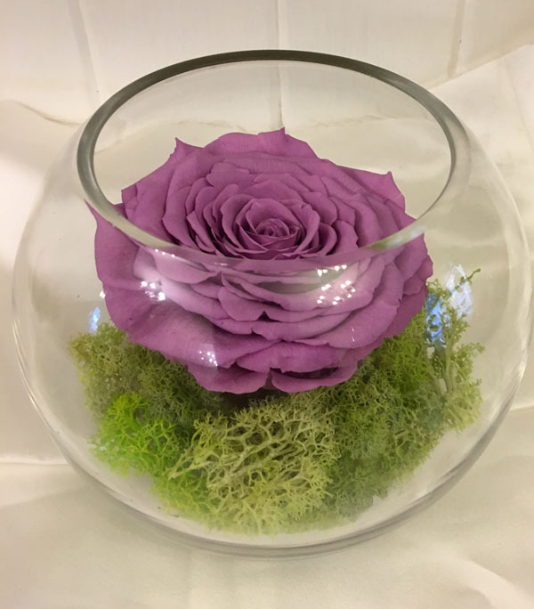 Medium Fishbowl with Lilac Preserved Super Rose