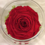 Medium Fishbowl with Red Preserved Super Rose