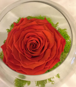 Medium Fishbowl with Orange Preserved Super Rose