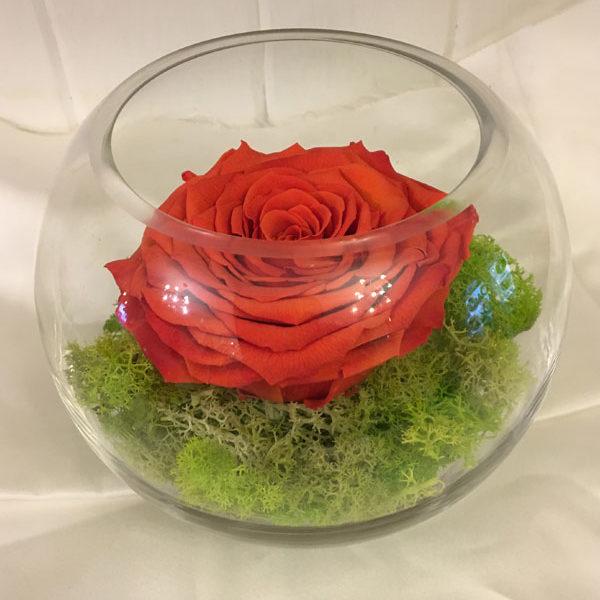Medium Fishbowl with Orange Preserved Super Rose
