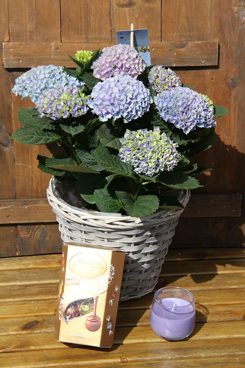 large blue hydrangea basket gift set with chocolates and scented candle