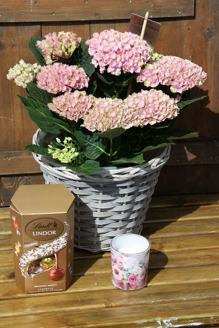 large pink hydrangea basket and gift set with chocolates and scented candledle