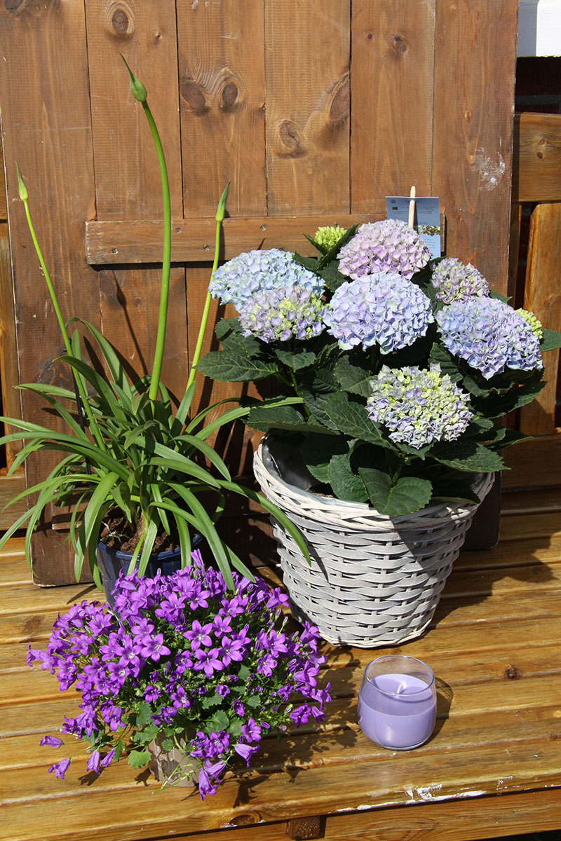 purples and blue deluxe plant set with scented candle