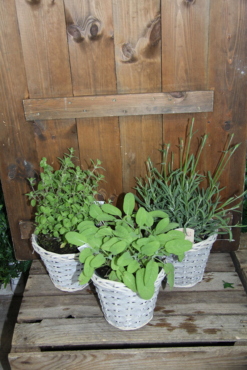 set of 3 mixed herb baskets