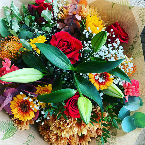 splendid autumn flowers