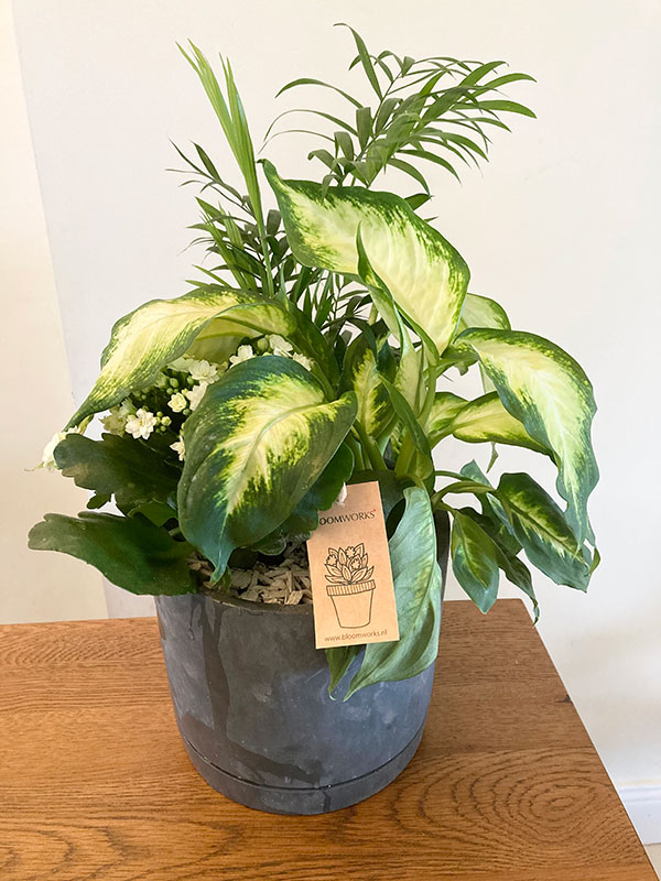 Indoor air purifying planter